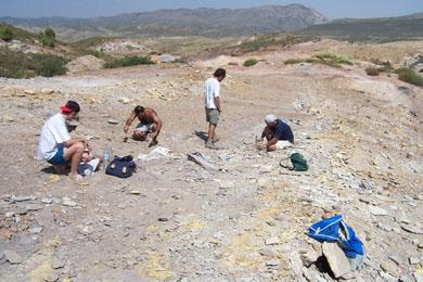 20070811005907-fosiles-plantas-alcaine.jpg