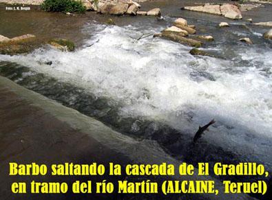 20091201221750-barbo-en-rio-martin-alcaine-.jpg