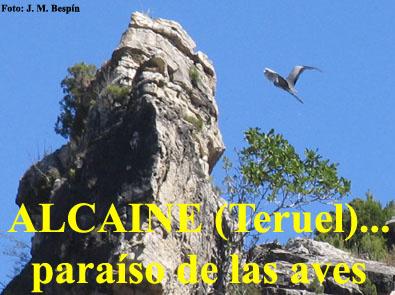 20110722120528-alcaine-aves-zepa.jpg