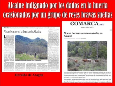 20141004222019-danos-huerta-vacas-alcaine.jpg
