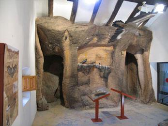 20070908185519-museo-fauna-alcaine.jpg