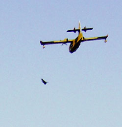 20071202115625-avioneta-canadair.jpg