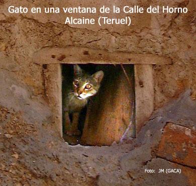 20090525005313-gato-ventana-alcaine.jpg