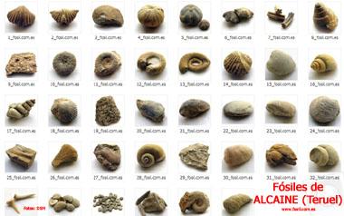 20090607132921-fosiles-de-alcaine.jpg