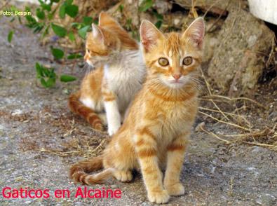 20090830000428-gaticos-en-alcaine.jpg