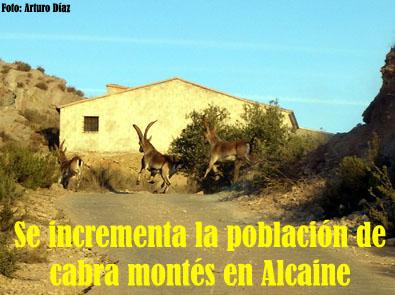20120323001828-cabras-montesas-alcaine.jpg