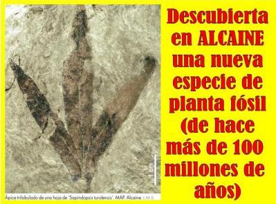 20160616232233-nueva-planta-fosil-alcaine.jpg
