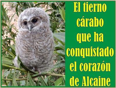 20210426085457-cria-de-carabo-en-alcaine.jpg
